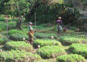 Women fetching water for their vegetable garden.