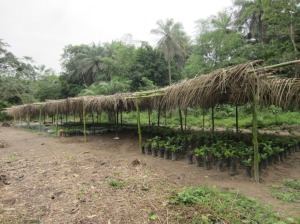 Tree nursery now holds 8000 seedlings.
