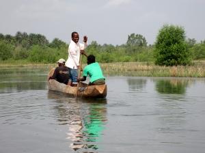 canoe among rice swamps