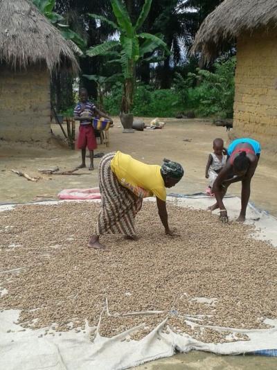 Veg - drying groundnuts