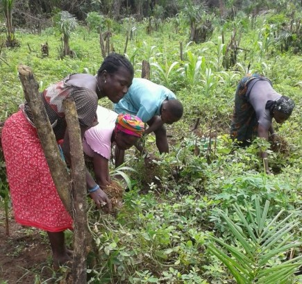 veg-groundnut-harvesting3