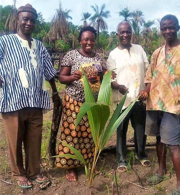 Starting an orchard the traditional African way