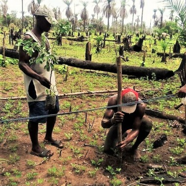 Roponga pegging orchard 6-13-17 (3)