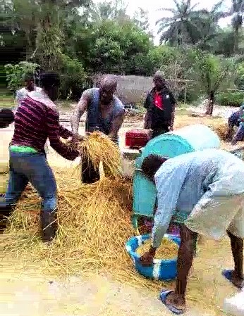 Rice threshing Oct '19_Moment(8)